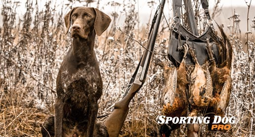 How to Gun Train your Hunting Dog