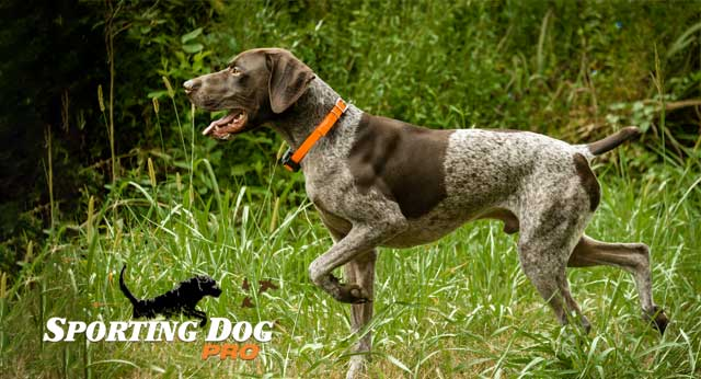 Pointers For Your Pointer