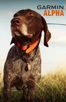 dog wearing alpha 100