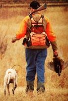 A gundog wearing the Garmin Alpha 100 tracking GPS