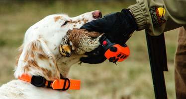 dog wearing rapt 1450 collar